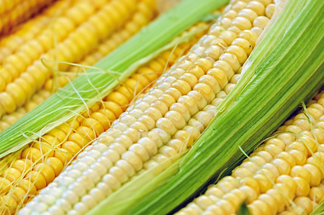 10 Incredible Health Benefits of Corn