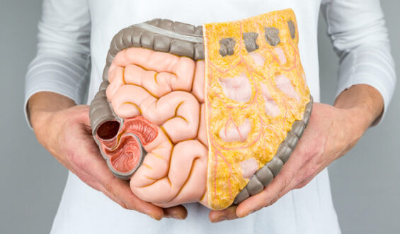 Useful tips for healthy digestive systems